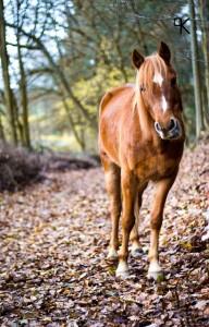 Pony & Pudel